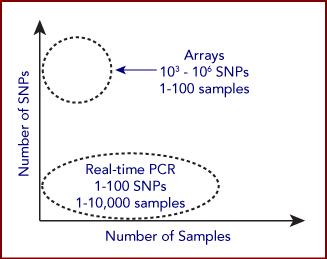 SNP graph